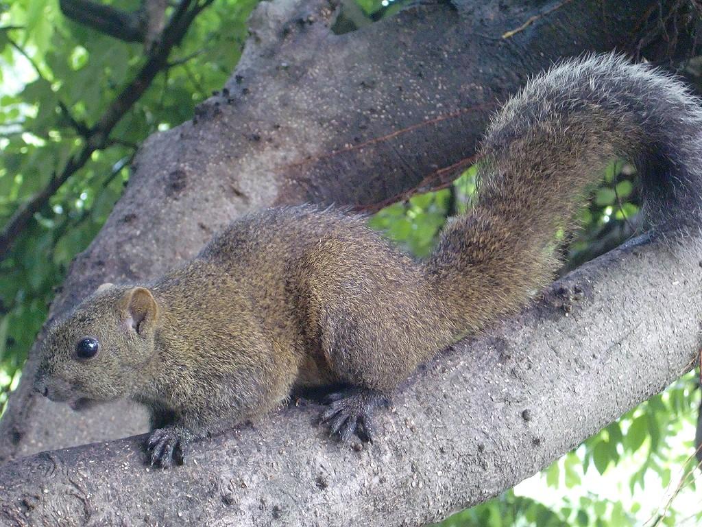 松鼠; 小松鼠特写镜头;; 冬眠的松鼠图片;
