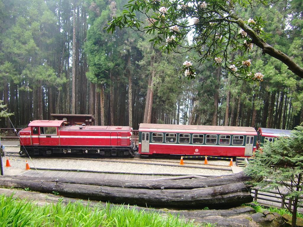 ɘ�里山小火車及舊神木 Ⱥ�著的就是